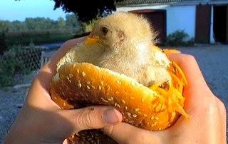 Como prevenir el cancer – ¿Vacas y pollos comen comida basura?